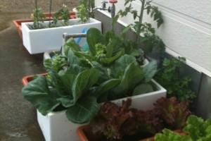 箱野菜で毎日ヘルシー